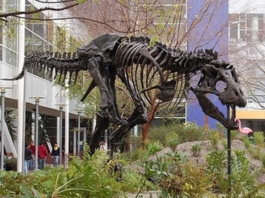pet T-rex  google