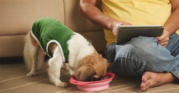 Top 8 Must Have Cool Gadgets For Dog Owners