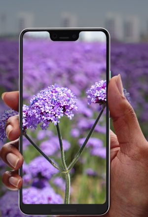 Top 10 Best Plant Identification Apps For Android & iPhone