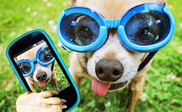 5 Must-Have Apps For Pet Lovers